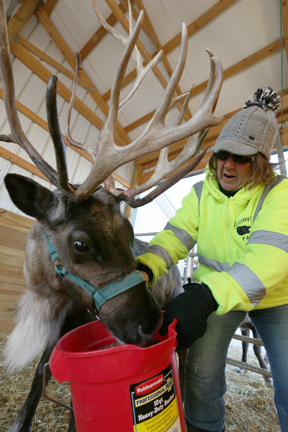 Feature on a far in Richland County where you can buy your own trees for Christmas, and also rent reindeer!