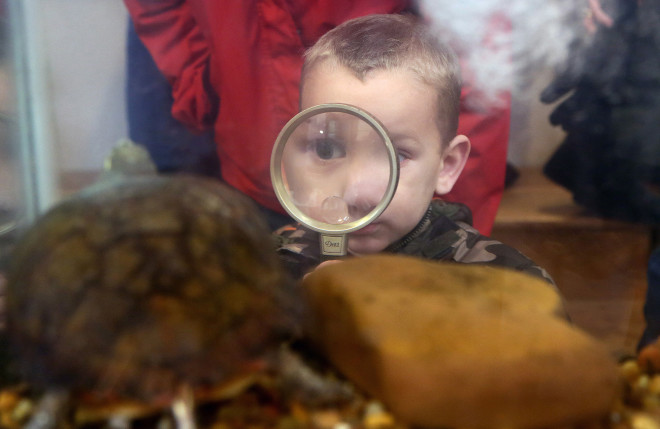 Kellen Pope, 3, of New Washington takes a closer look at a turtle during Rock and Fossil day at Lowe-Volk Park in Crestline, Ohio.