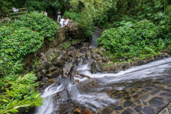 A newlywed post for photos in El Yunque National Park