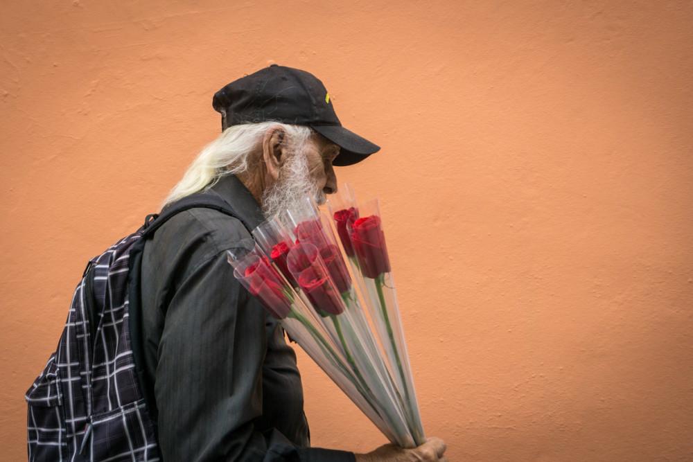 A rose anyone?