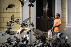 A father and son enjoy the pigeons